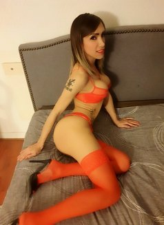 Antonella Gold - Transsexual escort in Milan Photo 8 of 10