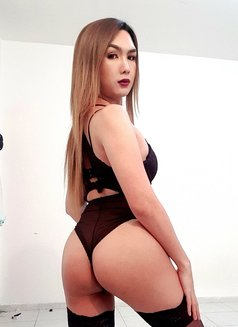 YOUNG PornStar TS AICO just landed - Transsexual escort in Angeles City Photo 24 of 27