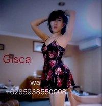 Gisca - Transsexual escort in Jakarta