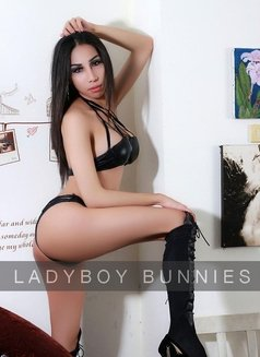 Ladyboy Bunnies - Transsexual escort agency in Bangkok Photo 2 of 4