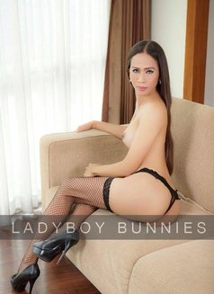 Ladyboy Bunnies - Transsexual escort agency in Bangkok Photo 1 of 4