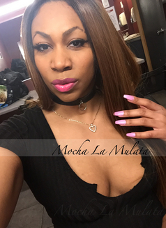 Mocha La Mulata - escort in Montreal Photo 11 of 18