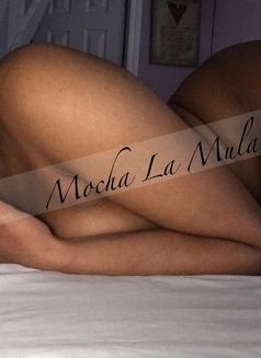 Mocha La Mulata - escort in Montreal Photo 12 of 18