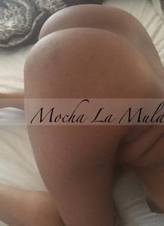 Mocha La Mulata - escort in Montreal Photo 16 of 18