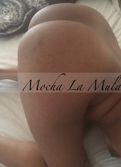 Mocha La Mulata - escort in Toronto Photo 16 of 18